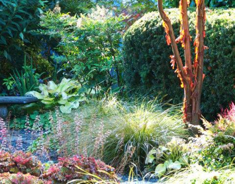 April Robins - Urban Garden