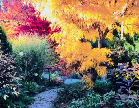 Stone Sparrow Gardens - Fall Planting with Path